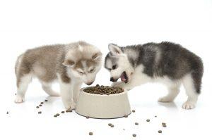 cuidados perros alimentacion