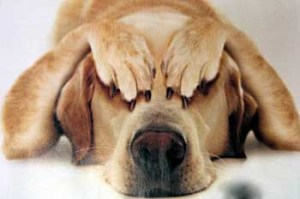 cuidados perros social salir calle