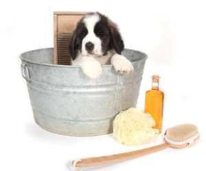 Cuidados perros higiene