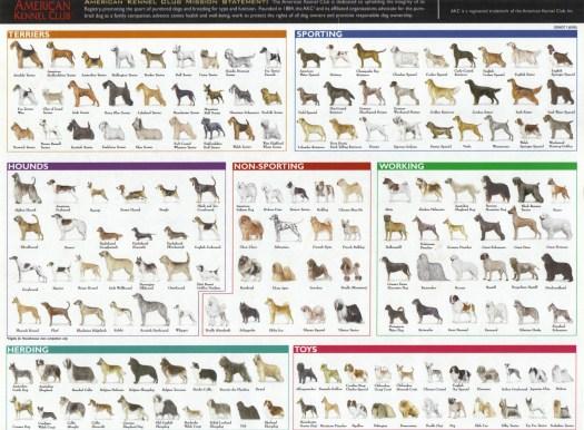 tabla caracteristicas razas perros