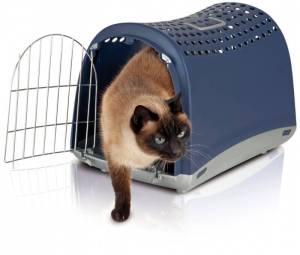 cuidados gatos la llegada a casa