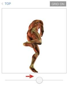 人体図静止画2
