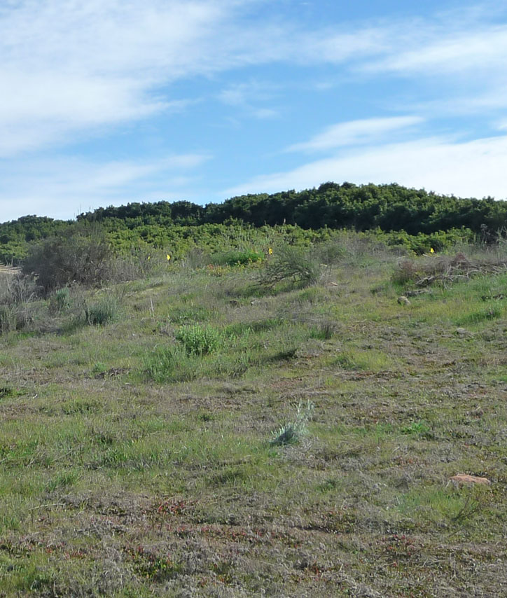 Open filed on the ranch in early Spring: January!