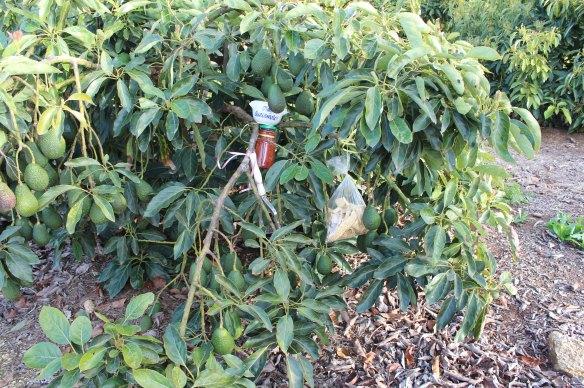 Guacamole Tree