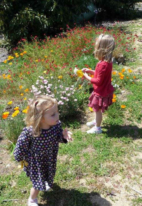 Picking wildflowers that were grown from seed