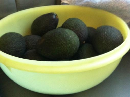 ripe avocados