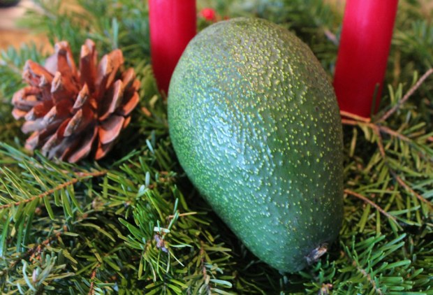 Christmas vocado