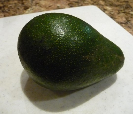 first Fuerte avocado of the season