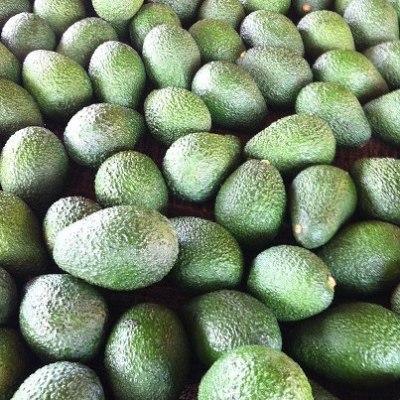 hard-avocados