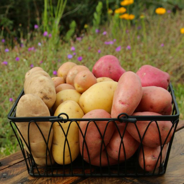5 potato varieties