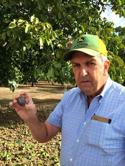 Stan Lester farms walnuts