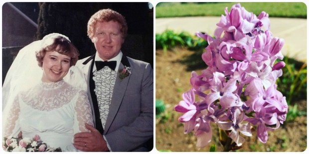 35th Wedding anniversary and a lilac bloomed!