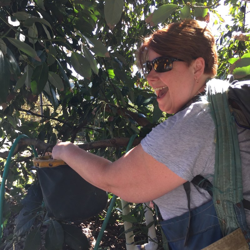 happy avocado picker