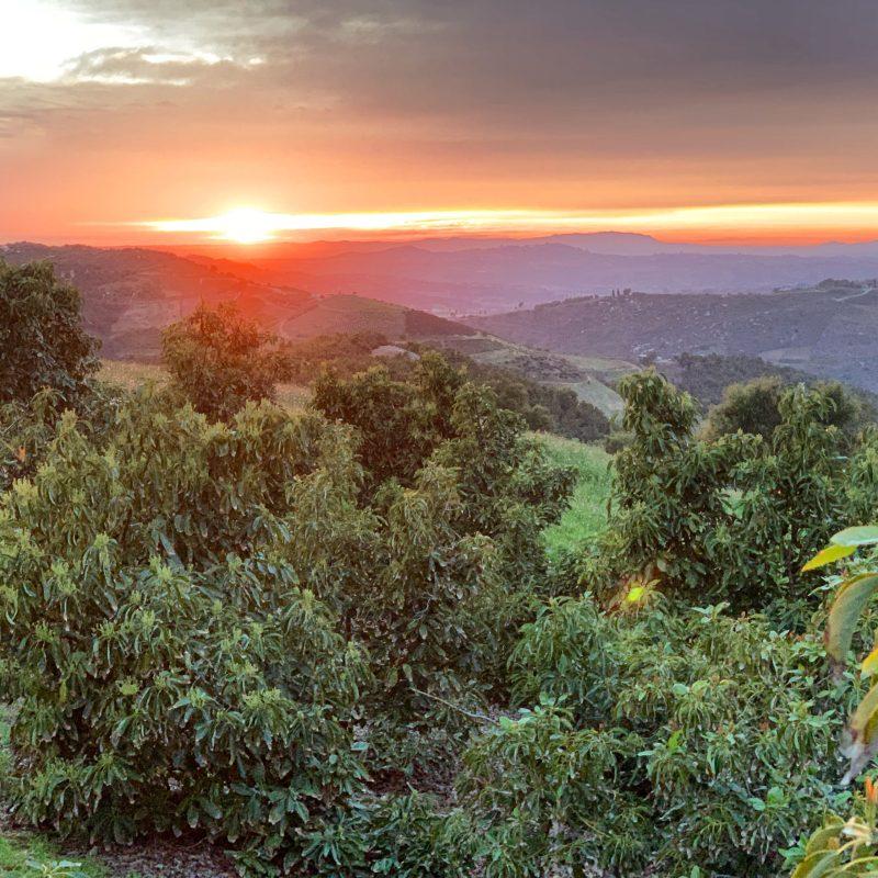 Sun setting in the grove