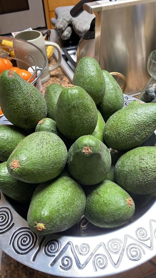 Fuerte Avocados from California Avocados Direct