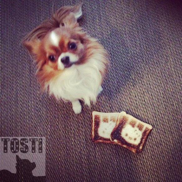 tosti_tosti