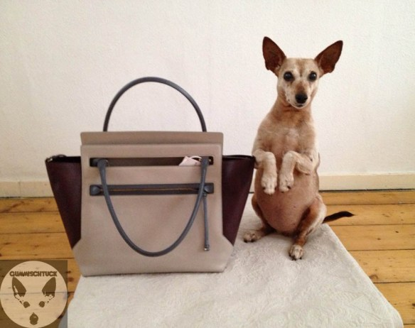 dog and jil sander bag