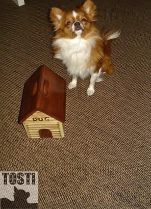 Adventure #24: Homeowner Tosti