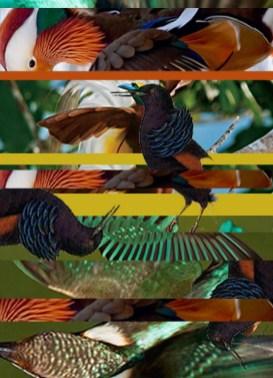 birds fashion fall 2014