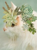 Cats and Plants by Stephen Eichhorn