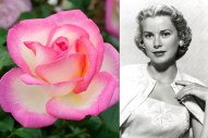 Grace Kelly The 'Princesse de Monaco,' introduced in France by Meilland et Cie in 1981, is a cream-color hybrid tea rose with pink edges and a mild, fruity fragrance. Photo courtesy of Meilland International; Pictorial Press Ltd/Alamy