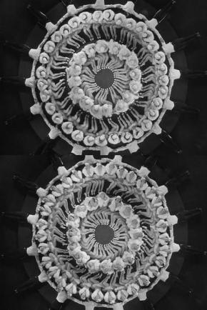Kaleidoscopes by Busby Berkeley