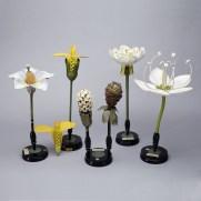 Flower Botanical Models