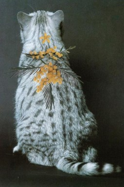 Cats and Plants © Stephen Eichhorn