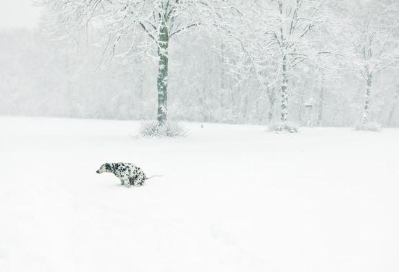 Silver white winters that melt into springs (dottie am schnee by mimi berlin)