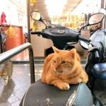 台湾に秋が来た。猫奴歓喜の季節到来だ。