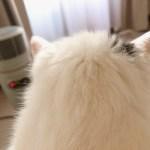 うちの猫(推定19歳)キーボード押しまくりツイッターデビューしそうになった