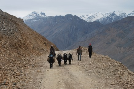 Donkeys in Spiti, Northern India