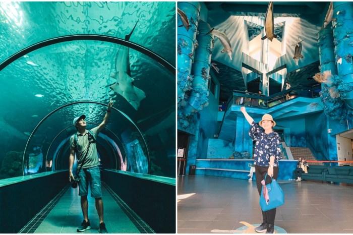 澎湖景點|澎湖水族館:波浪海堤/鯊魚餵食秀/海底隧道,內外好玩必拍亮點大公開!