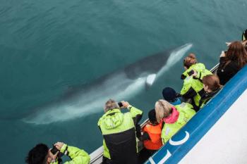 【冰島賞鯨Tour】雷克雅維克出發看鯨魚:最佳賞鯨季節推薦,機率超過95%