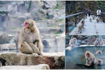 長野 地獄谷野猿公苑(附交通):湯田中站出發看猴子泡溫泉好療癒,日本必訪十大景點