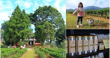 【南投景點】日月老茶廠:品嚐頂級有機紅玉紅茶,充滿農人堅持與茶香味的老茶廠