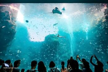 桃園景點|Xpark水族館:2021最新購票重點/交通建議/必拍景心得全攻略