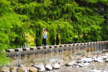 花蓮壽豐|雲山水夢幻湖(免門票景點):落羽松秘境&跳石步道,有熊的森林住宿更美好