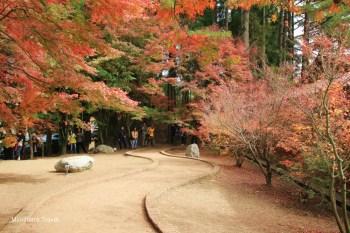 【台中景點】福壽山農場:松廬鴛鴦湖畔楓紅楓葉也太美!是大自然不小心打翻顏料嗎?