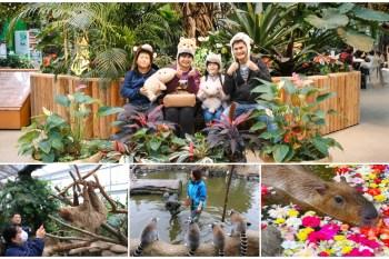 神戶景點「神戶動物王國」親子旅遊超人氣:水豚君大樹懶互動零距離!交通&門票建議