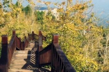 【南投景點】景色如畫,鹿谷大崙山觀光茶園:銀杏森林、武岫農圃、觀霧亭 ~