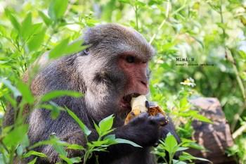 【台南.南化】來場與猴兒們的近距離接觸吧~ 我在「烏山台灣彌猴保護區」