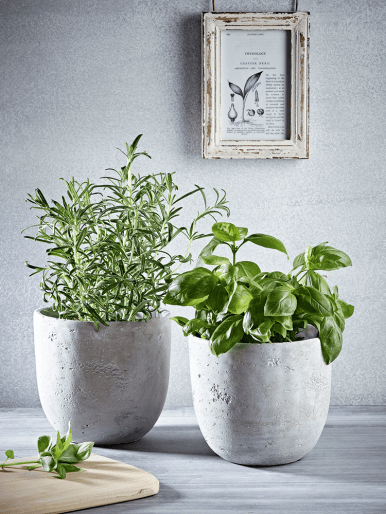 Shake up the senses with living herbs!