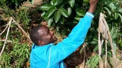 Photo of Agric expert to combat poverty via fruit tree cultivation