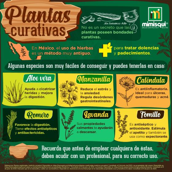 plantas_curativas