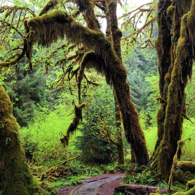 Hoh Rain Forest.jpg
