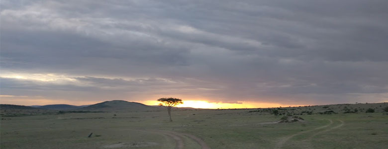 Paint of Masai Mara 4