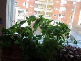 Kúpila som bylinky!