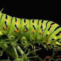 Flora e fauna fotografata da Mimmo Contartese
