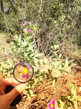 Descubirendo la naturaleza con una lupa